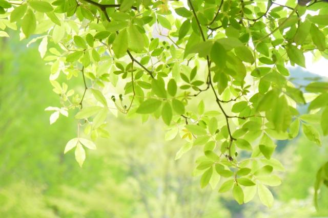 緑を見て視力回復