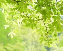 美しい木の葉