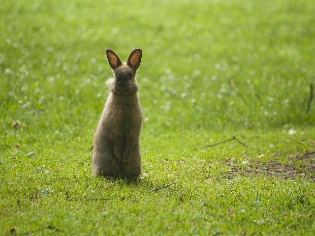 【かわいいウサギの写真】