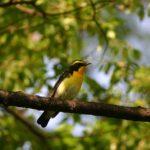 どうして寝ている鳥は、木から落ちないの?
