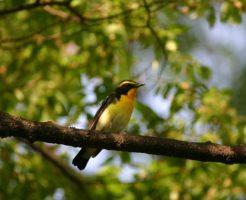 木の枝で眠る鳥